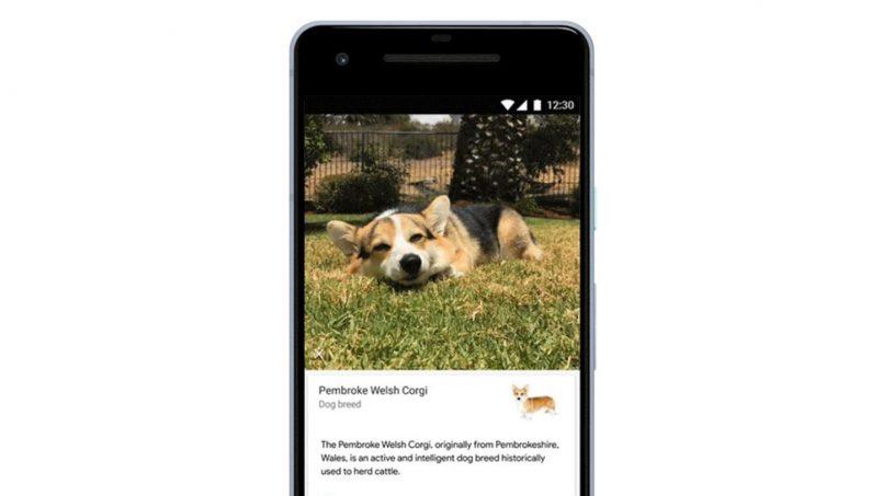 Google Lens Kini Boleh Mengenalpasti Baka Kucing Dan Anjing