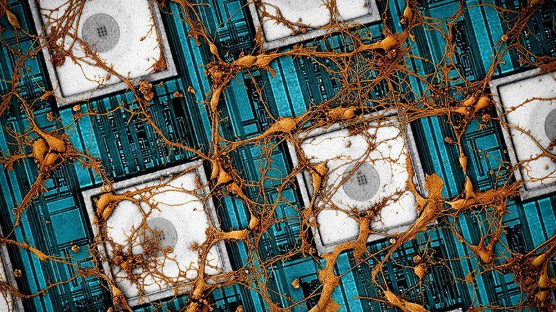 Samsung Ingin Membangunkan Cip Neuromorfik Yang Mirip Otak Manusia